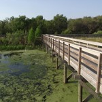 Kapok Park Extension - Boardwalk