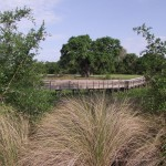Kapok Park Extension - Eastern Boardwalk