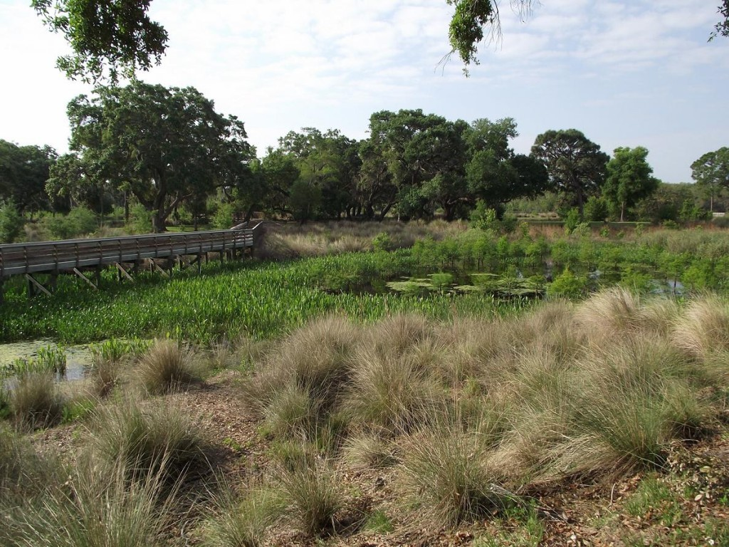 Kapok Park Extension - Wetlands
