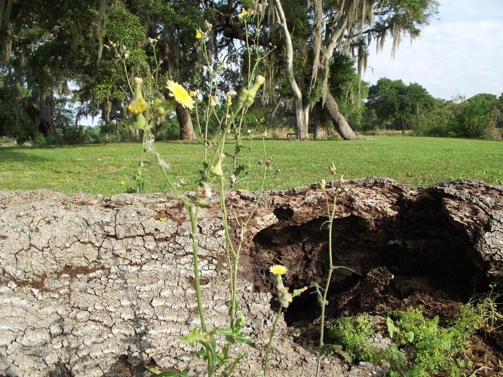 Kapok Park Extension - Fallen Tree