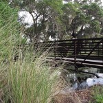 Kapok Park Extension - Bridge