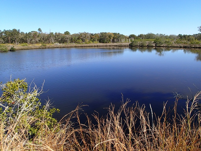 Pond in N. Anclote River Nature Park