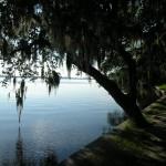 Philippe Park - Shoreline