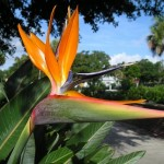 Bayshore Linear Greenspace - Bird of Paradise