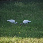Skyway Trail - Storks