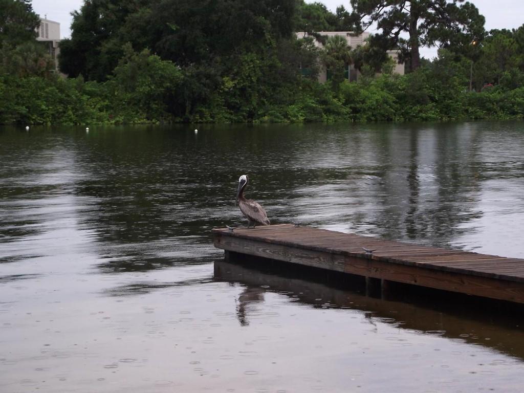Maximo Park - Pelican & Boat Launch