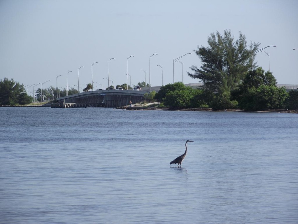 Skyway Trail - Bridge & Heron