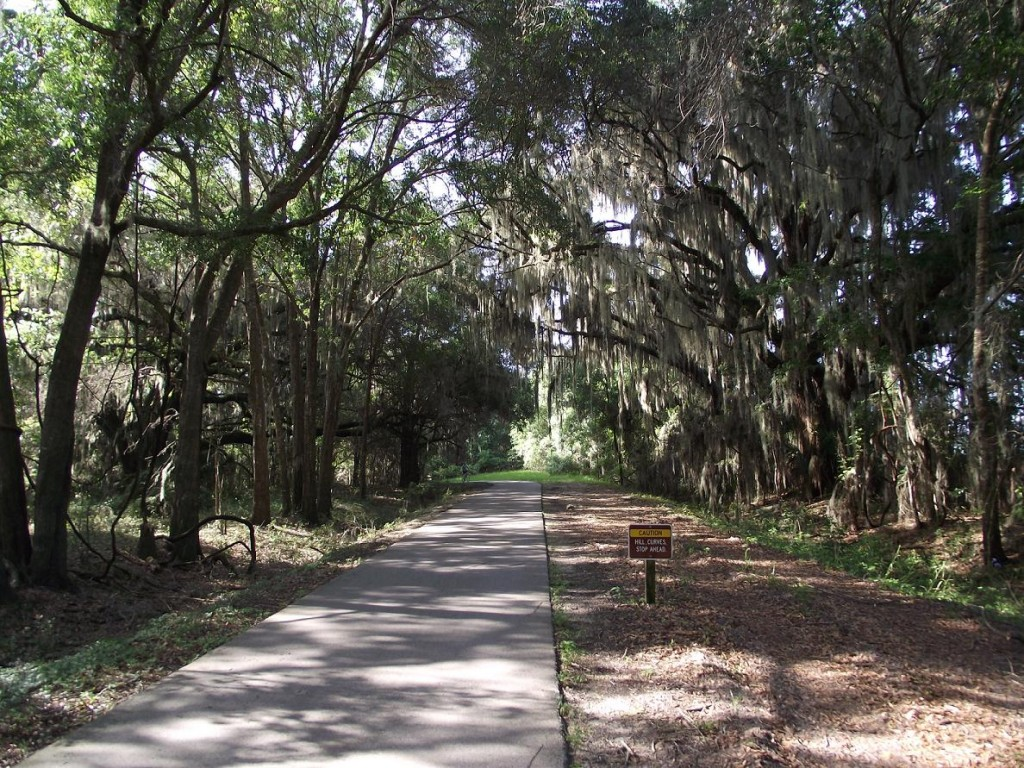 Spanish Moss Covered Trees