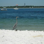 Fort Pickens - Blue Heron
