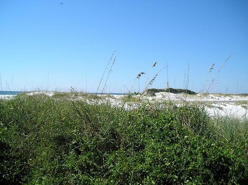 Gulf Islands National Seashore - Sand dunes