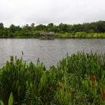 Kapok Park Scenic Overlook (part of Ream Wilson Trail)