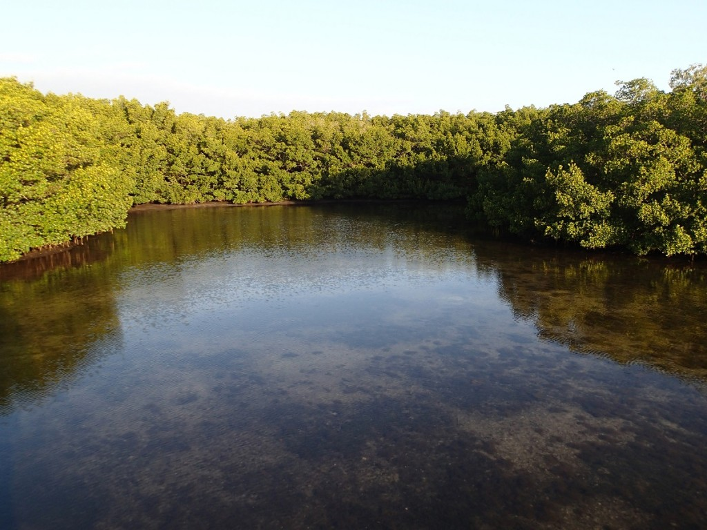 North Bay Trail - Weedon Island Lagoon