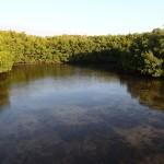 North Bay Trail - Weedon Island Lagoon