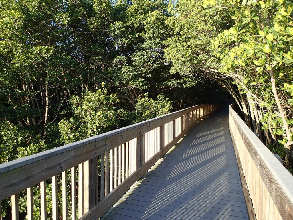 North Bay Trail - Weedon Island Tunnel of Mangrove Trees