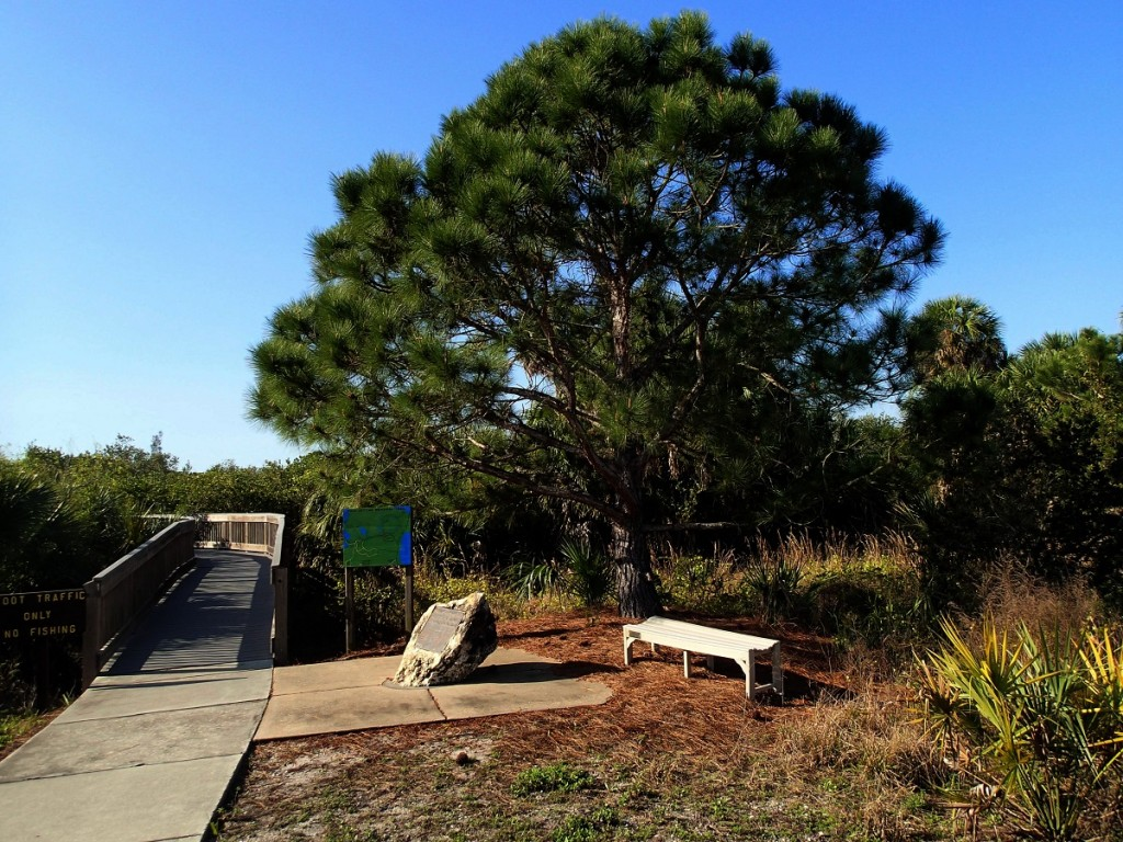 North Bay Trail - Weedon Island Pine Tree & Boardwalk