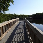 North Bay Trail - Weedon Island Scenic Boardwalk Overlook