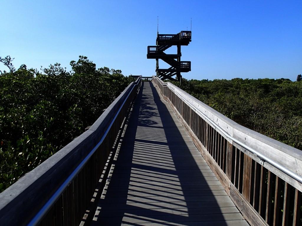 North Bay Trail - Weedon Island Tower Overlook
