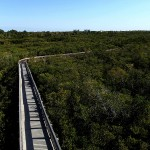 North Bay Trail - Weedon Island Boardwalk