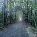 Tree canopy along Suwannee River Greenway