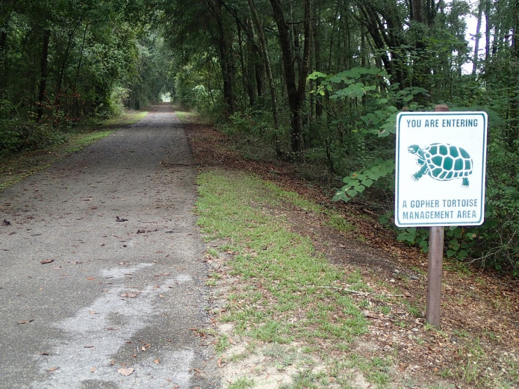 Suwannee River Greenway - Gopher Tortoise Management Area