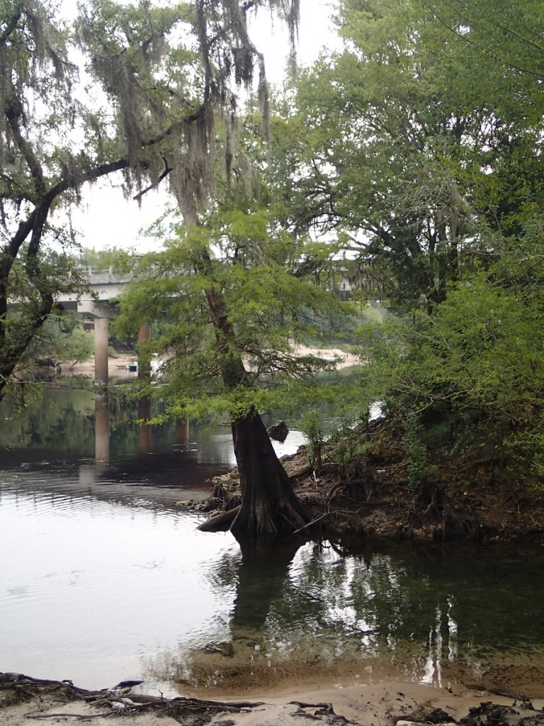 Suwannee River Greenway - Shores of Suwannee River