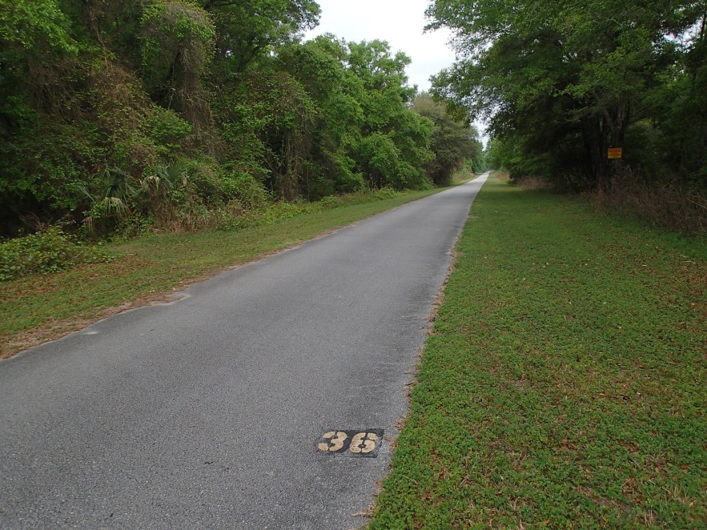 Withlacoochee State Trail - Mile Marker 36 Looking North
