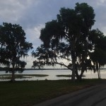 Withlacoochee State Trail - Sunrise Trees