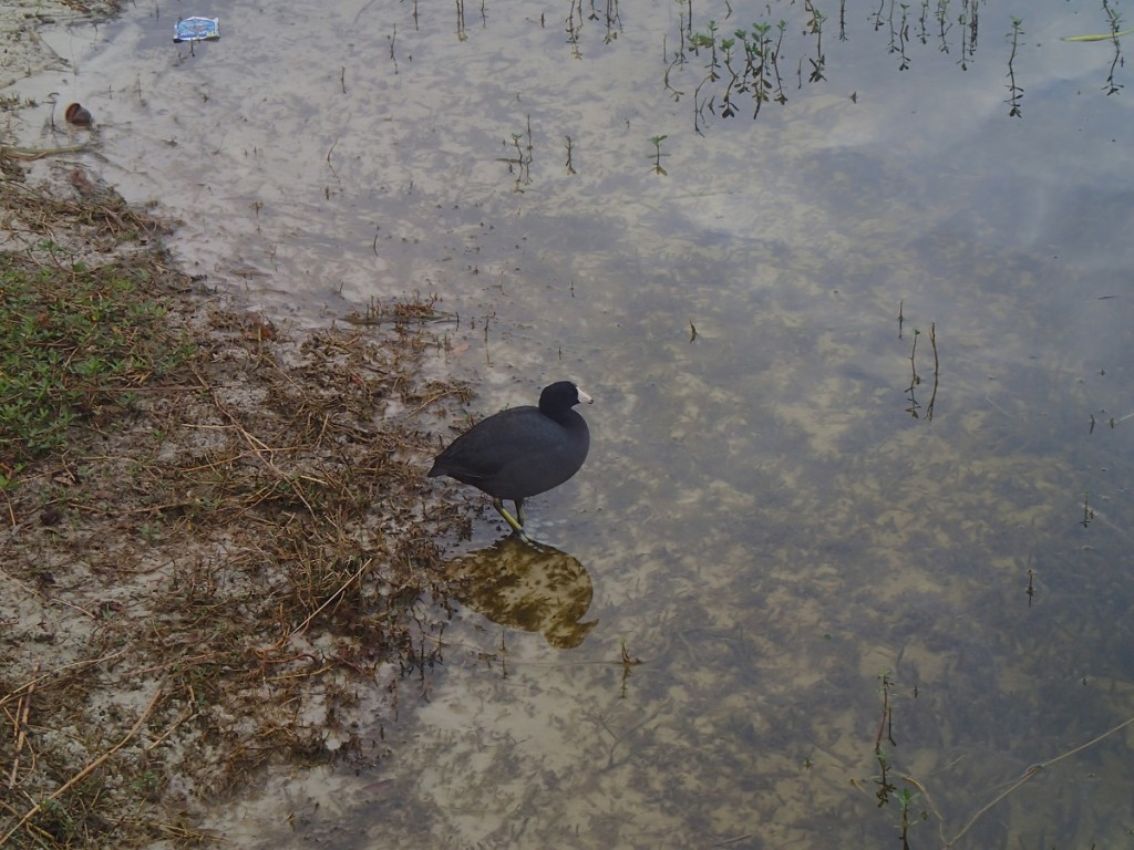 Withlacoochee State Trail - Waterbird