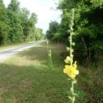 Withlacoochee State Trail - General Trail Shot