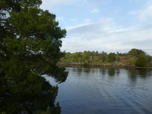Withlacoochee Bay Trail - View of Canal