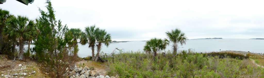 Withlacoochee Bay Trail - Shoreline