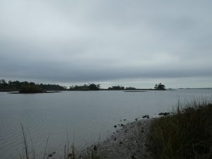 Withlacoochee Bay Trail -Oyster Bay Estuary