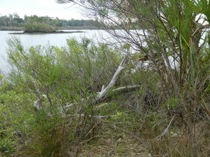 Withlacoochee Bay Trail -Driftwood