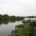Bayou Off Old Clearwater Bay
