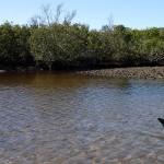 North Anclote River Estuary