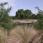 Kapok Park Extension - Eastern Boardwalk