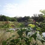 Kapok Park Extension - Looking South
