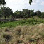 Kapok Park Extension - Wetlands