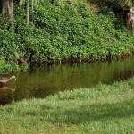 Kapok Park Extension - Woodstorks