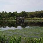 Kapok Park Extension - Lake Overlook