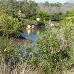 Clam Bayou Kayak