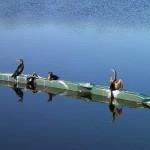 Skyway Trail Extension - Cormorants