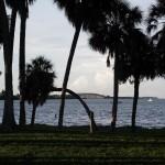Maximo Park - Palms & Dick Misener Bridge