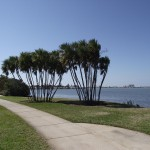 Clearwater - Edgewater Park
