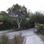 Boca Grande Bike Path - General Trail Shot