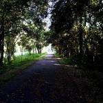 Nature Coast State Trail - Tree Canopy