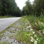 Nature Coast State Trail - Trail Shot at Grade