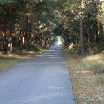 Nature Coast State Trail - Tunnel of Trees