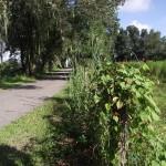 Fort Fraser Trail - Fence Post