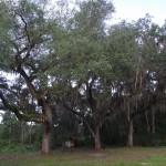 Prairie Creek Preserve Trailhead